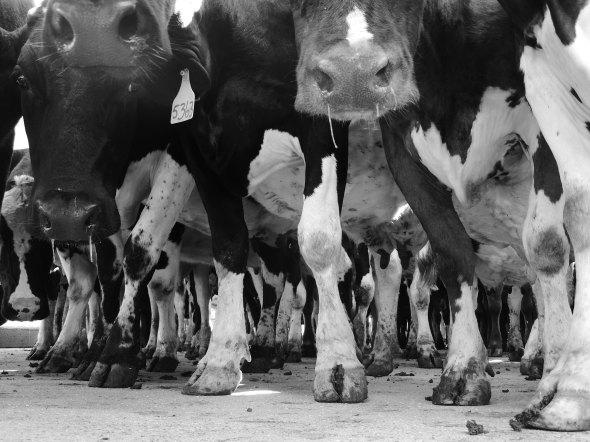 Shapely Calves