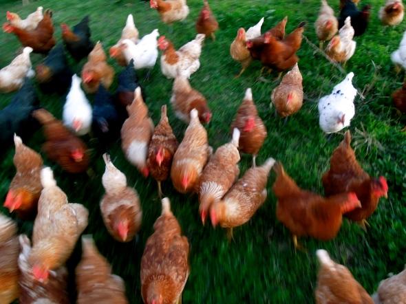 Winner Winner, Chicken Dinner Time